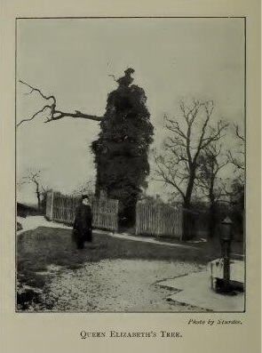 Queen Elizabeth Oak 1902, from AD Webster