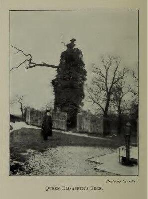 Queen Elizabeth Oak 1902, from AD Webster