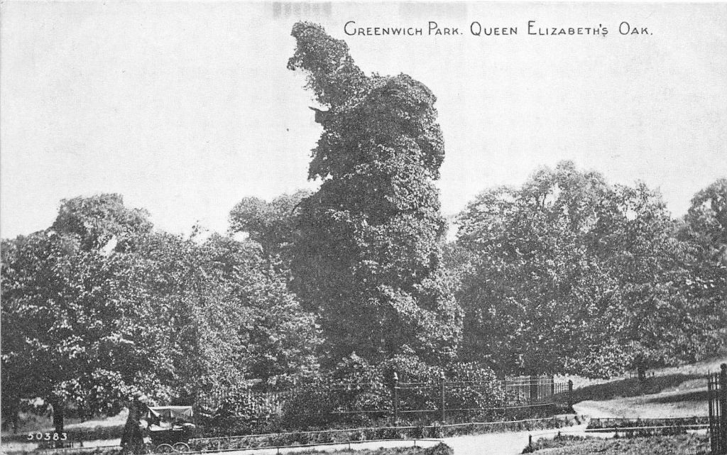 Queen Elizabeth Oak 1922